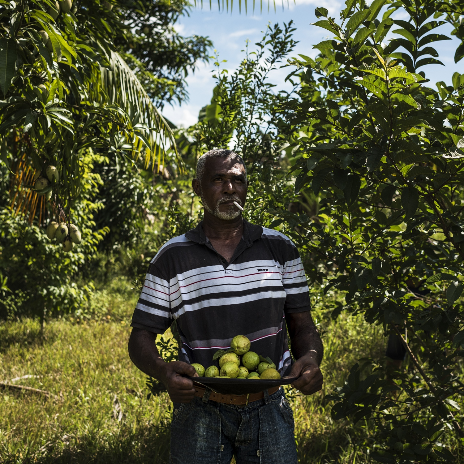 2016. Fisherman Raimundu Morad Araugo collects fruit from trees at the property he was displaced from on the banks of the Xingu River. Norte Energia the company building the Belo Monte dam destoryed his home and filled his well with rocks to prevent his return. The land will be flooded only on years with higher than normal rainfall. /Aaron Vincent Elkaim