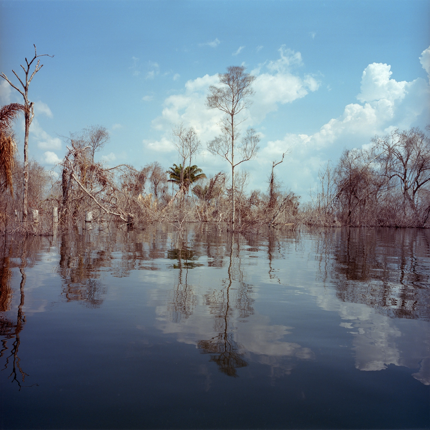 2016. Flooded islands and dead trees on the reservoir of the Belo Monte Dam. Rivernine people were displaced from many of the islands that have now been flooded. The trees were supposed to be cut down prior to flooding to reduce methane emissions, but much was simply left to die and rot.