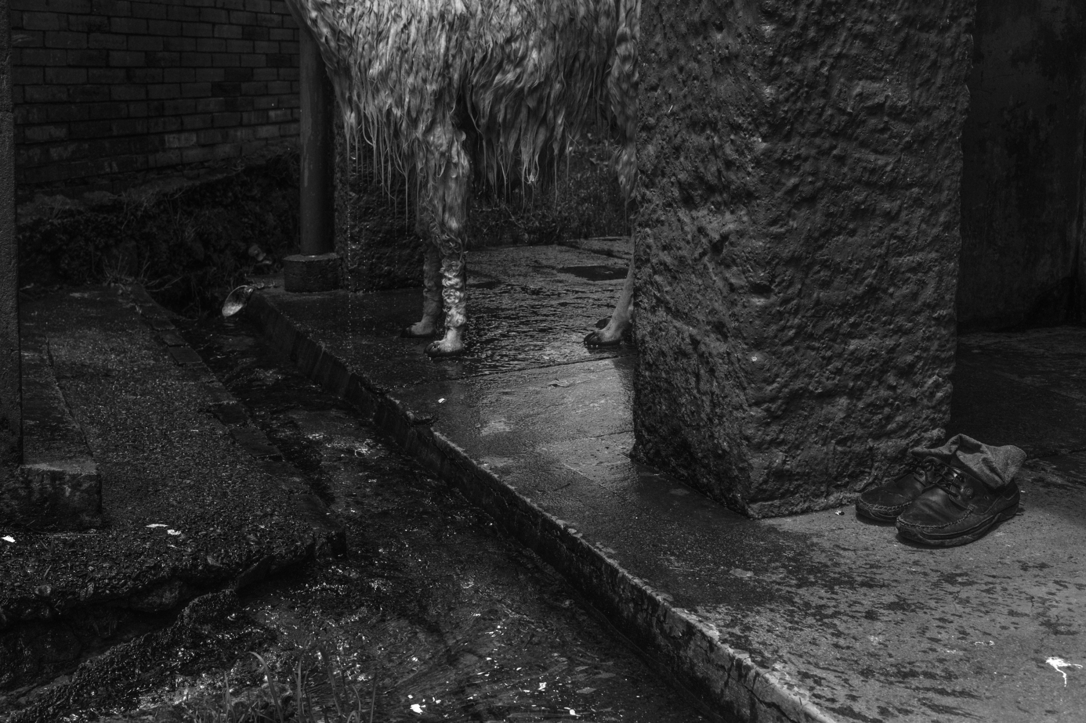 Art and Documentary Photography - Loading ZuletaR__os_CarangasYElJaguar_007.JPG