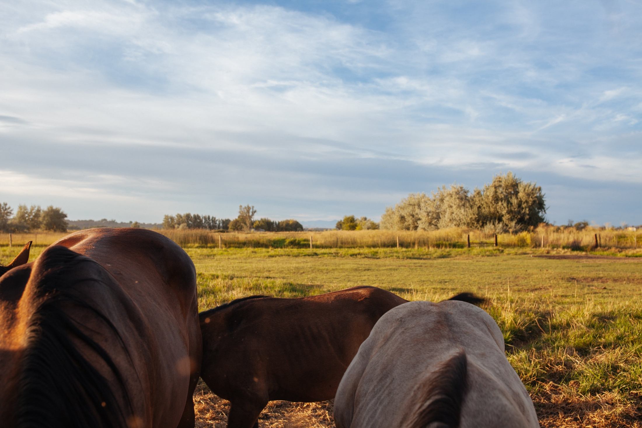 Horses in Payette, Payette, ID.