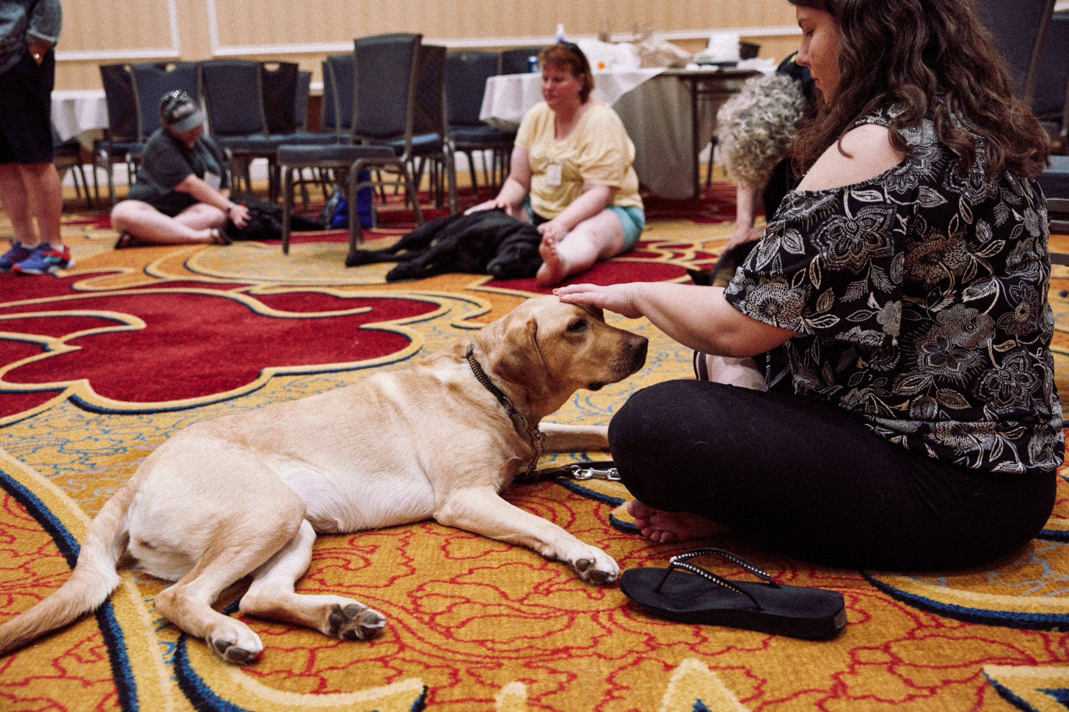 Art and Documentary Photography - Loading 070218_ACBConvention-StLouis_GDUICanineMAssage_1123.png