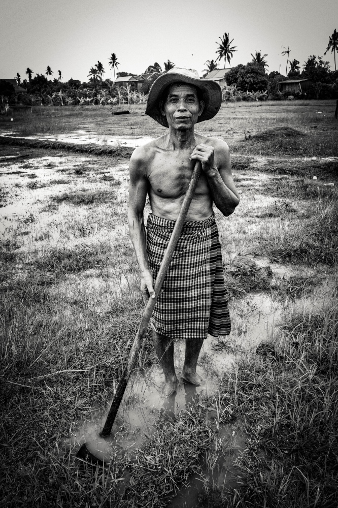 Photography image -  Working the Paddy Field , Koh Trong, Cambodia
