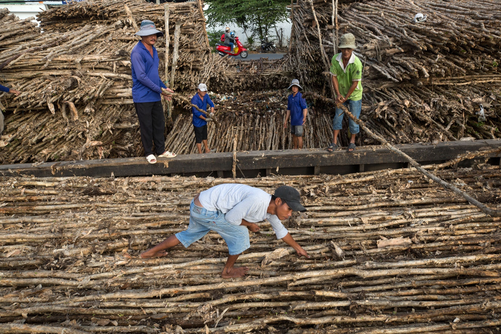 Workers unload a large barge laden to the brim with wooden poles. Transported by river to Can Tho city the poles are sold for use mainly in construction. Whilst roads have replaced a lot of river transportation routes, for larger cargos such as this the river is still the easiest and most economical way to travel.