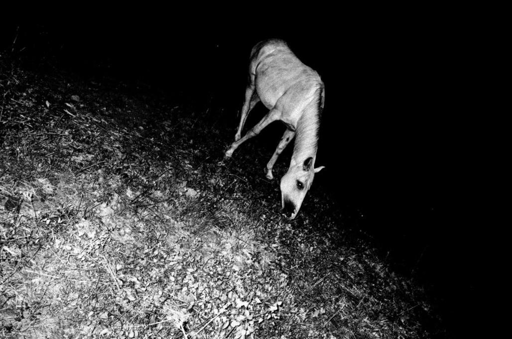 Art and Documentary Photography - Loading Eschaton_Matthias_Koch-21.jpg