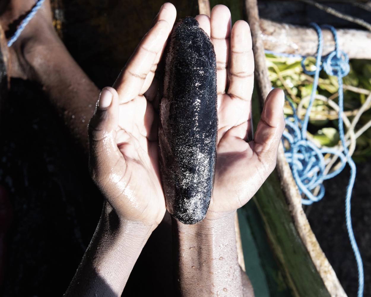 A diver shows a Sea Cucumber he caught.