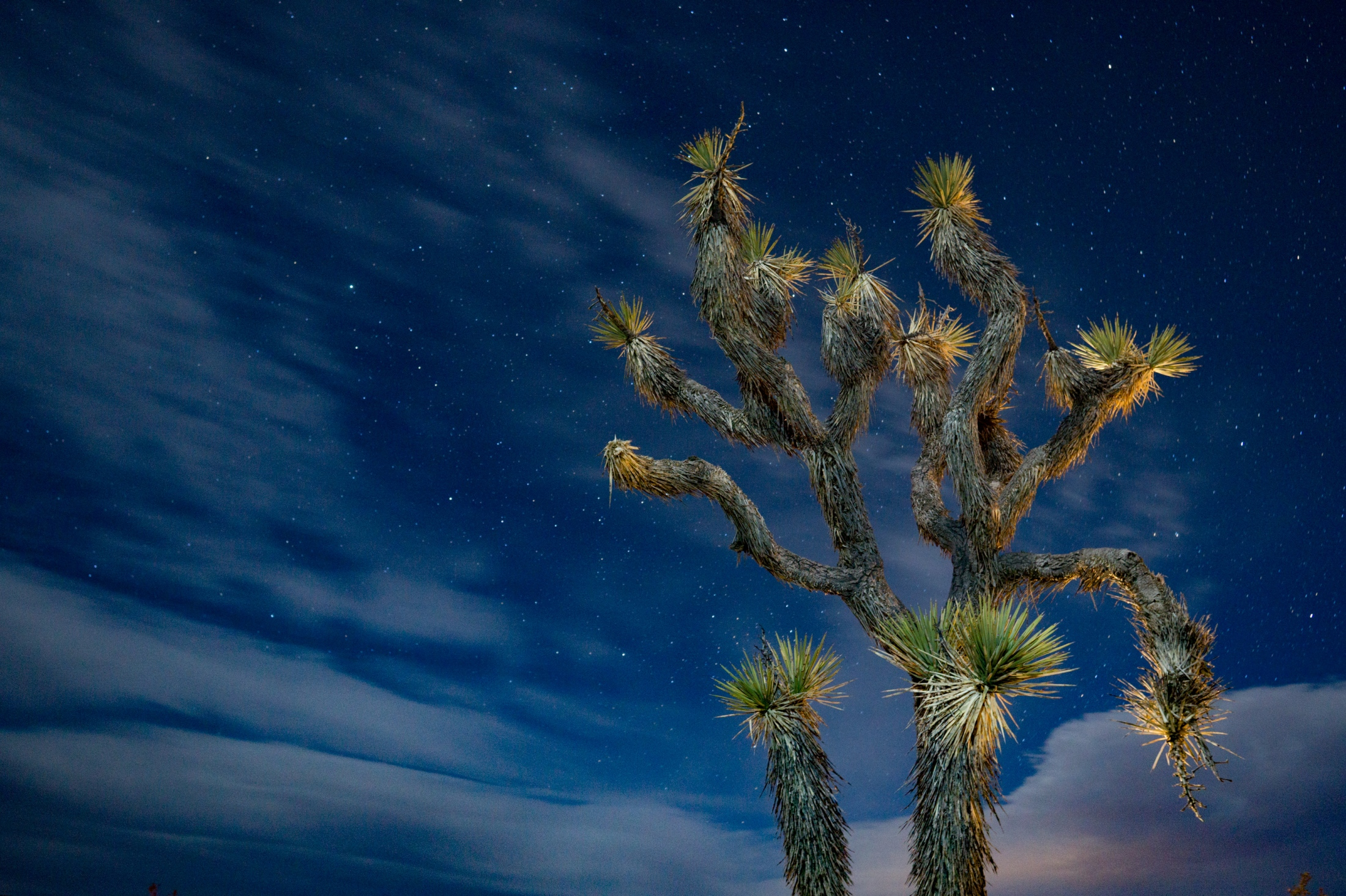 Joshua Tree Mojave Desert, California