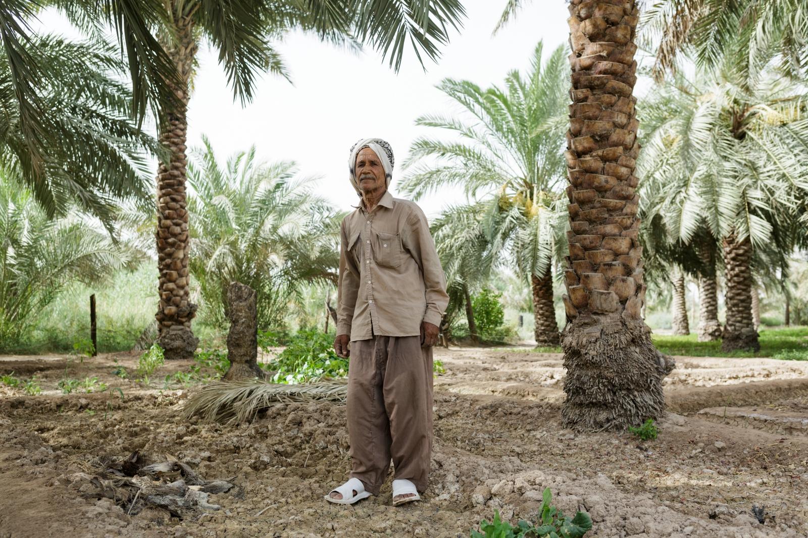 A date farmer in Abadan, Khuzestan, Iran.