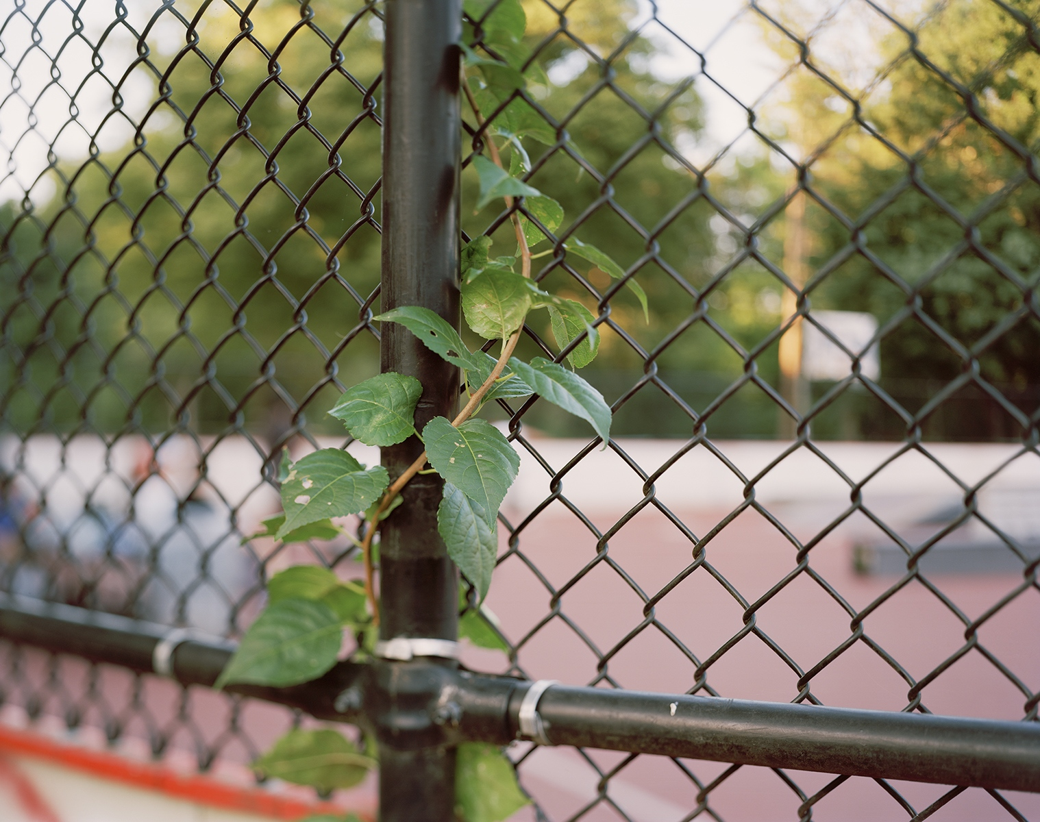 Art and Documentary Photography - Loading FenceBranch02.jpg