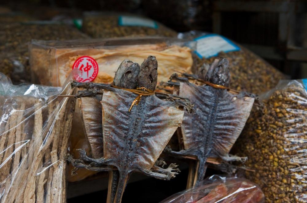 Murcielagos, usado como polvo para el re-enjuvenecimiento, es uno de los animales usados en la medicina china tradicional. Entre serpientes, caballos marinos y escorpiones/ Bats, used in the form of a power is used for rejuvenation, is one of the animals used in traditional chinese medicine. Among other animals such as snakes, sea-horses and scorpions. Guangzhou
