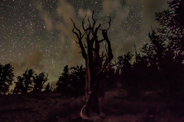 Ancient Bristlecone Forest in Bishop California.