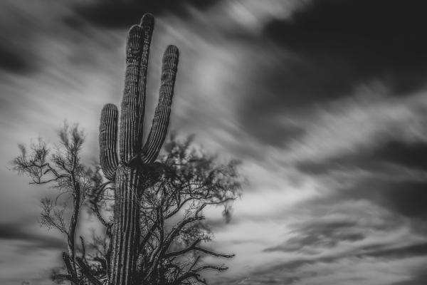 Cactus in Mesa, Arizona.