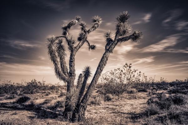 Mojave, California.