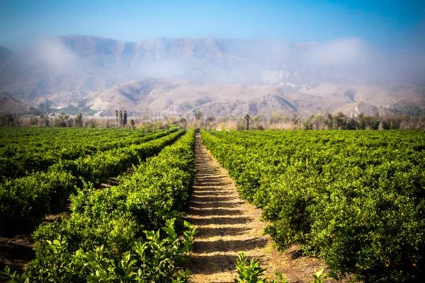 Farm in Ventura County California.