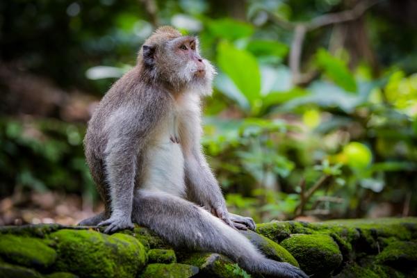 Monkey Forest, Ubud.
