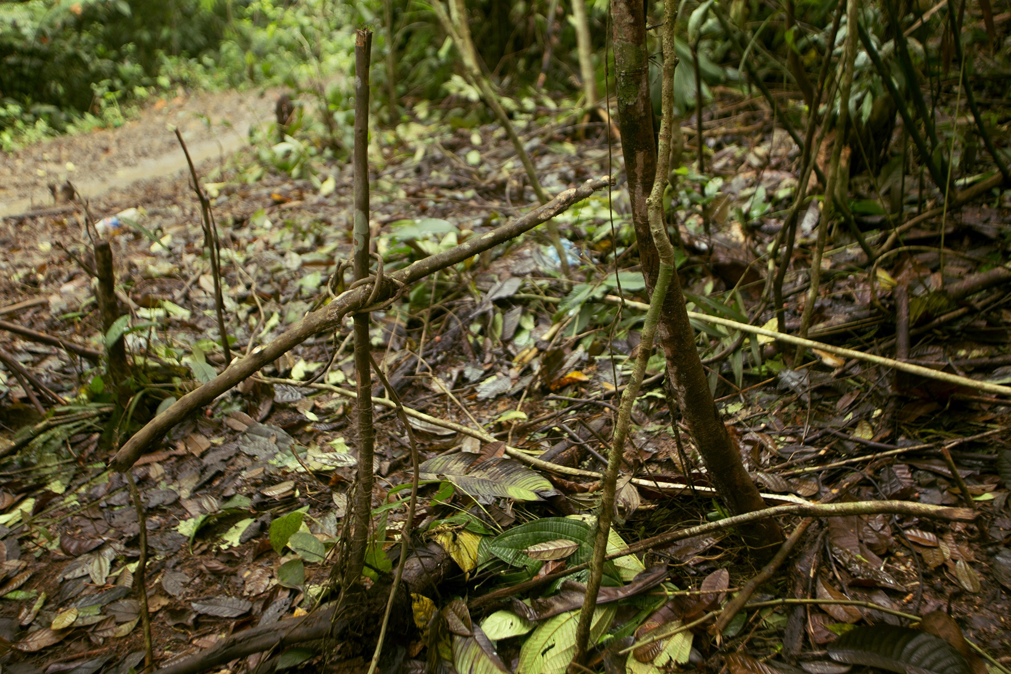 "Place where anti-narcotics laundering members opened fire on coca growers and inhabitants of the area, killing 7 people. Rural area of ""El Tandil"", Nariño, Colombia."
