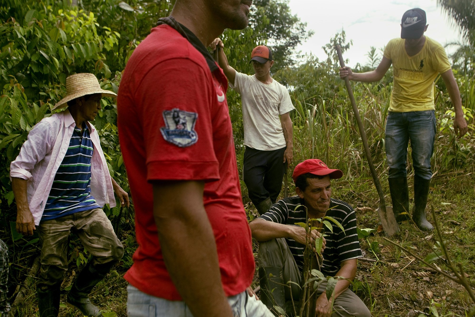 "A group of peasants voluntarily eradicate the coca bush in a ""Minga"" or collective effort of the community, prior agreement with the national government in the framework of the PNIS (National Program of Substitution of Illicit Use Crops) in the area of Carmen Bajo in the municipality of La Montañita, Caquetá, Colombia."