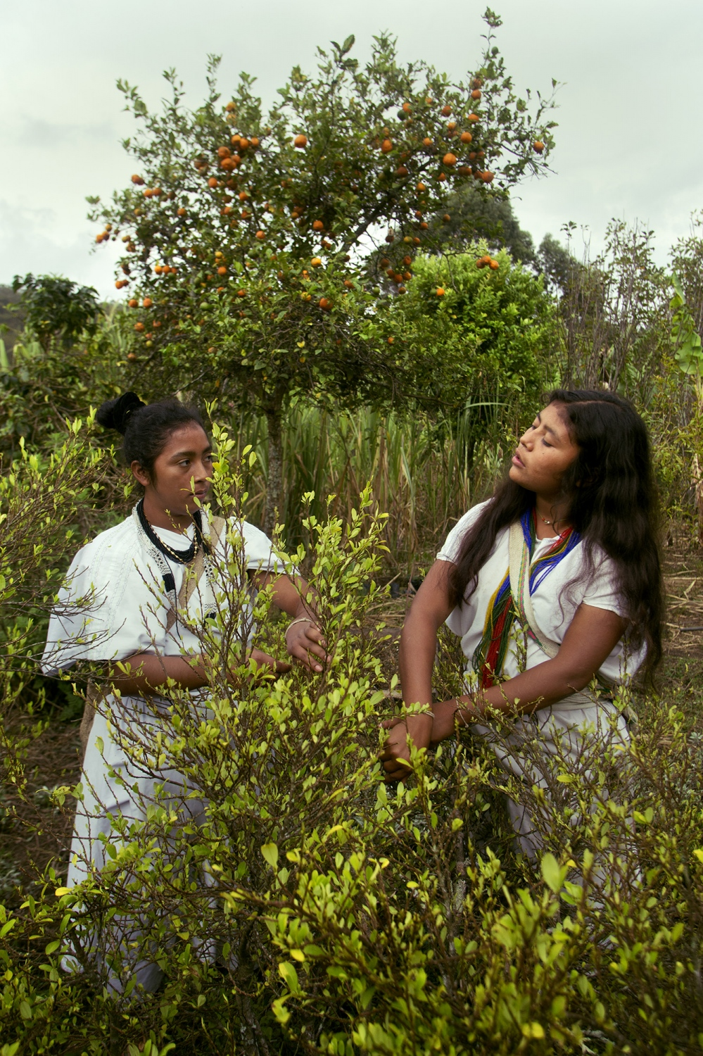 Daniela Villafaña and his cousin of the Arhuaca ethnic group, collect coca leaf for the daily ceremonies that this population has. The coca leaf is fundamental for the cultural development of the peoples of the Sierra Nevada of Colombia, as well as for other peoples throughout Colombia and South America. It is not considered a drug but a sacred plant and in that sense the natives profess a deep respect. Nabusimake, Cesar, Colombia.