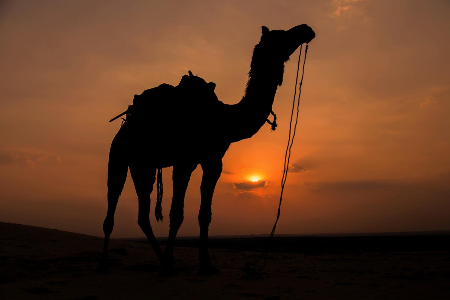 Thar Desert. India