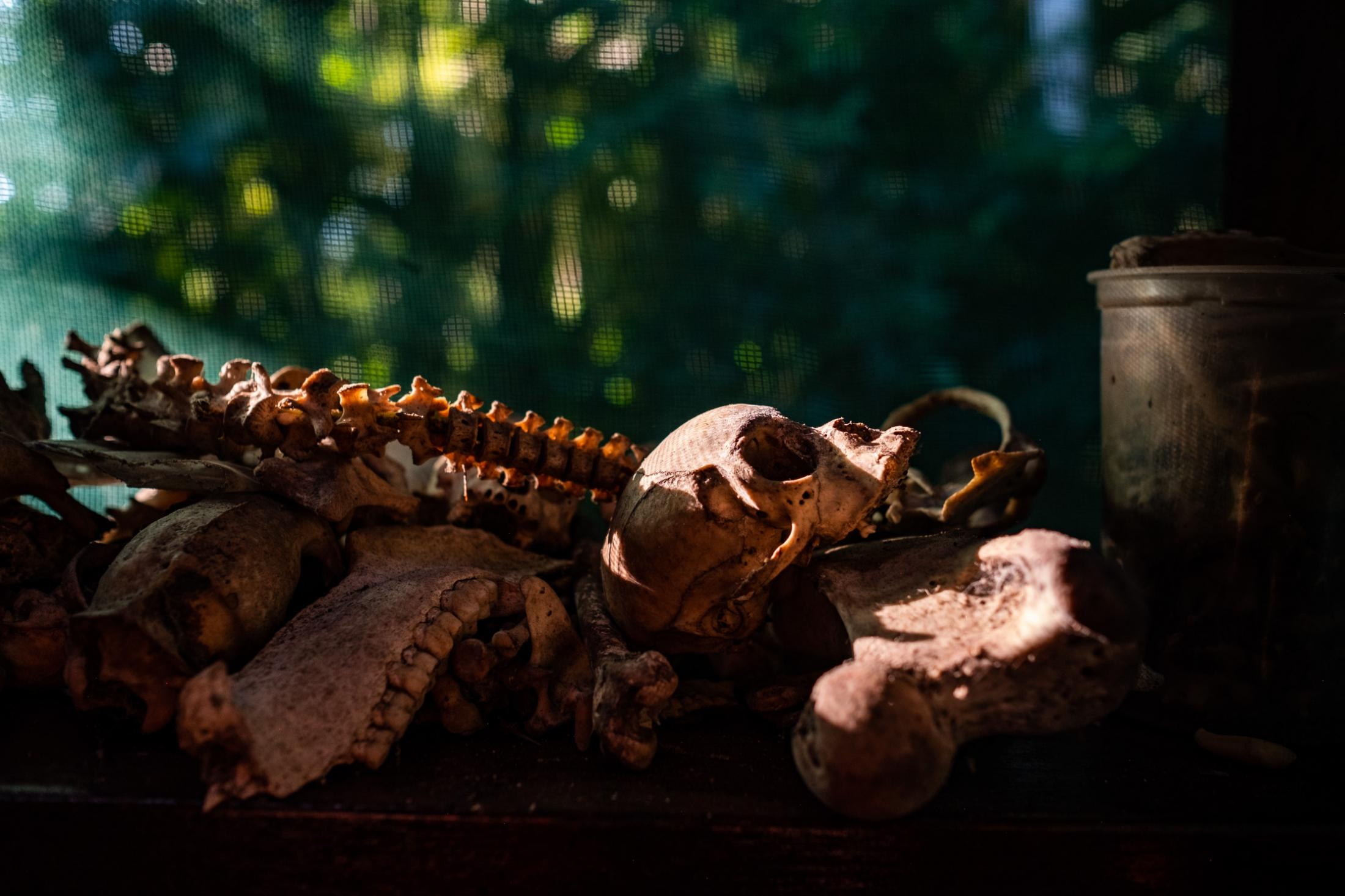 Misc Bones. Manu National Park, Peru.