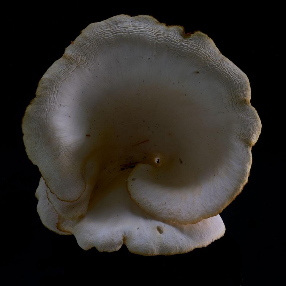 Photography image - Loading mushroom-4.jpg