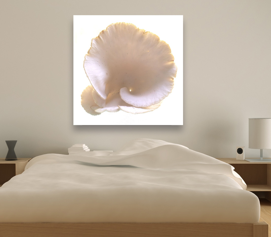 Art and Documentary Photography - Loading Oyster_Mushroom-in-bed-room.jpg