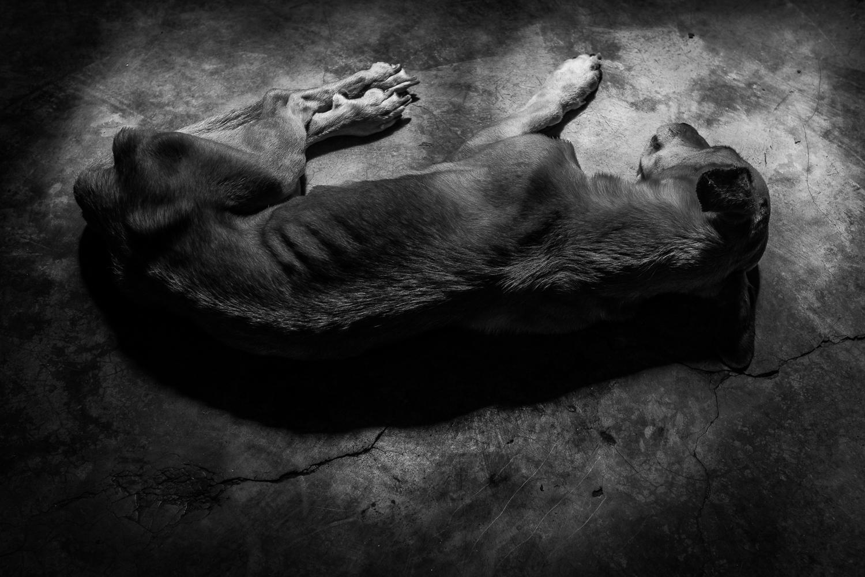 Art and Documentary Photography - Loading Hunger_Crimes_-_Ignacio_Marin-5.jpg