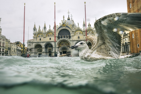 SUBMERGED VENICE - Photography project by Diana Bagnoli