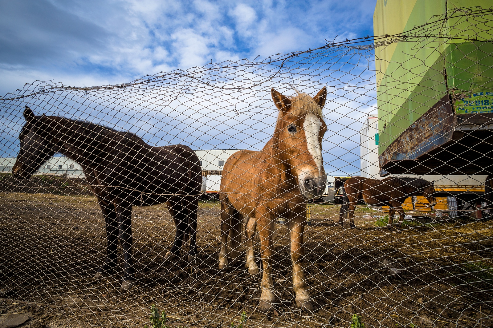 Some horses are kept within the grounds of a goods storage facility
