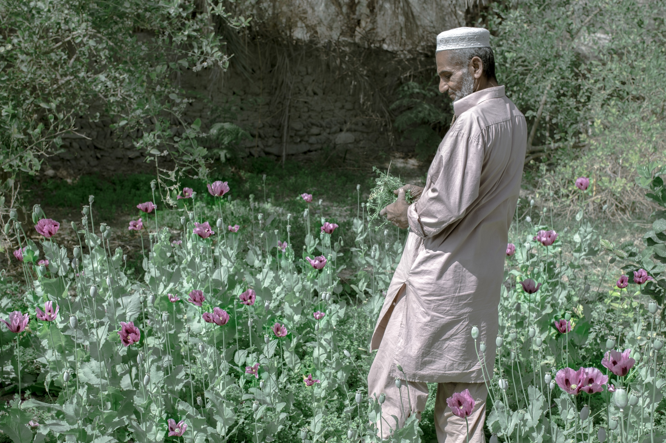 "Ahmad Rakhshani has planted poppy in his garden for personal consumption.""The Afghanistan government has tried to make big dams in the upper region of the Helmand River to prevent the water to our side in Iran, and the government in Iran doesn't care about our rights."" Hamun wetlands in Iran-Afghanistan border substantially dried up due to drought and Iran-Afghan disputes over Hirmand River and the construction of large dams on the River for poppy cultivation in Afghanistan have worsened the crisis. Sistan Province, Iran.2018"