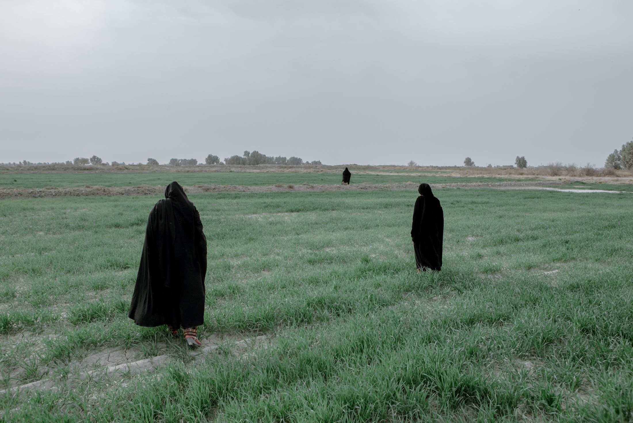 Women are looking for herbs on their agricultural land in a village close to the Afghanistan border. The people of this village water their farmlands using the floodwater, or precipitation in Afghanistan, and sometimes from the surplus water from Hirmand river that flows from Afghanistan into Iran.Sistan province. Iran. 2018