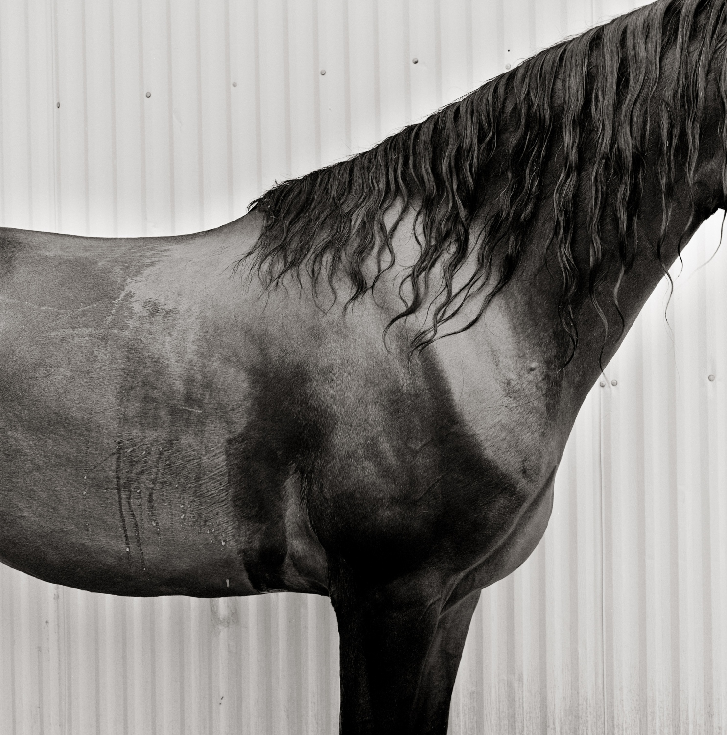 Art and Documentary Photography - Loading UVM_Mallory__Morgan_Horse_Farm__Weybridge__Vermont_(BJS-20080827_6x6_01).jpg