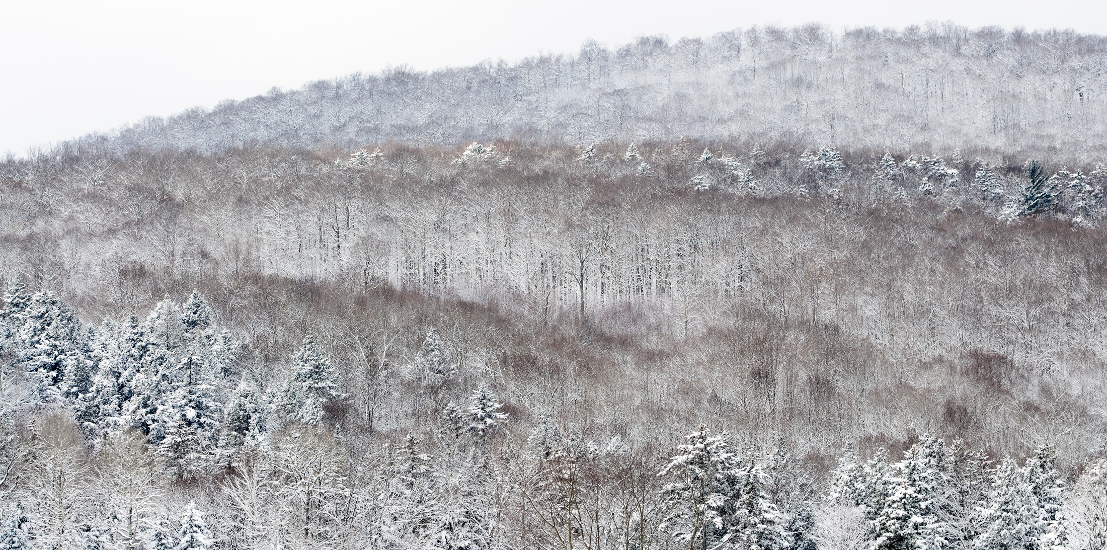 Art and Documentary Photography - Loading Winter_Snow__Breadloaf_Wilderness__Ripton__Vermont.jpg