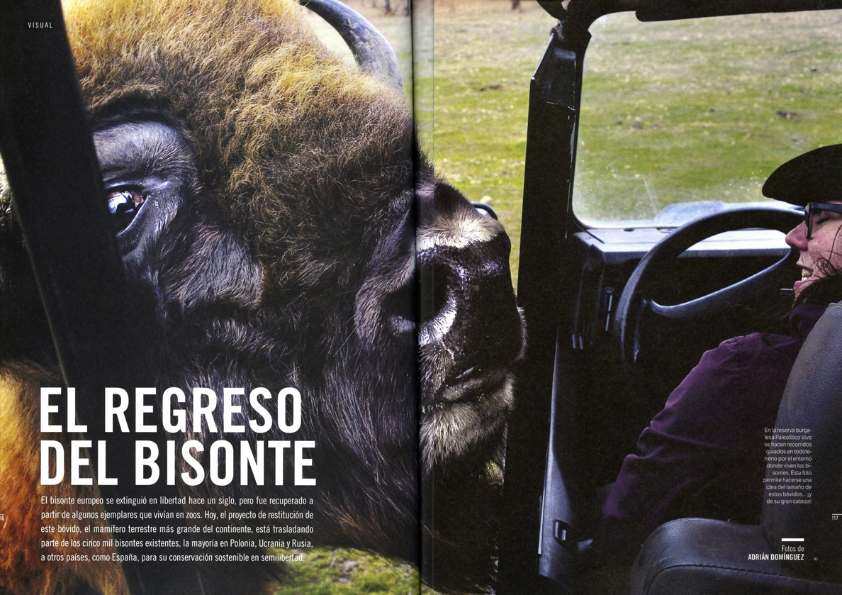 Art and Documentary Photography - Loading Muy_Bisonte.jpg