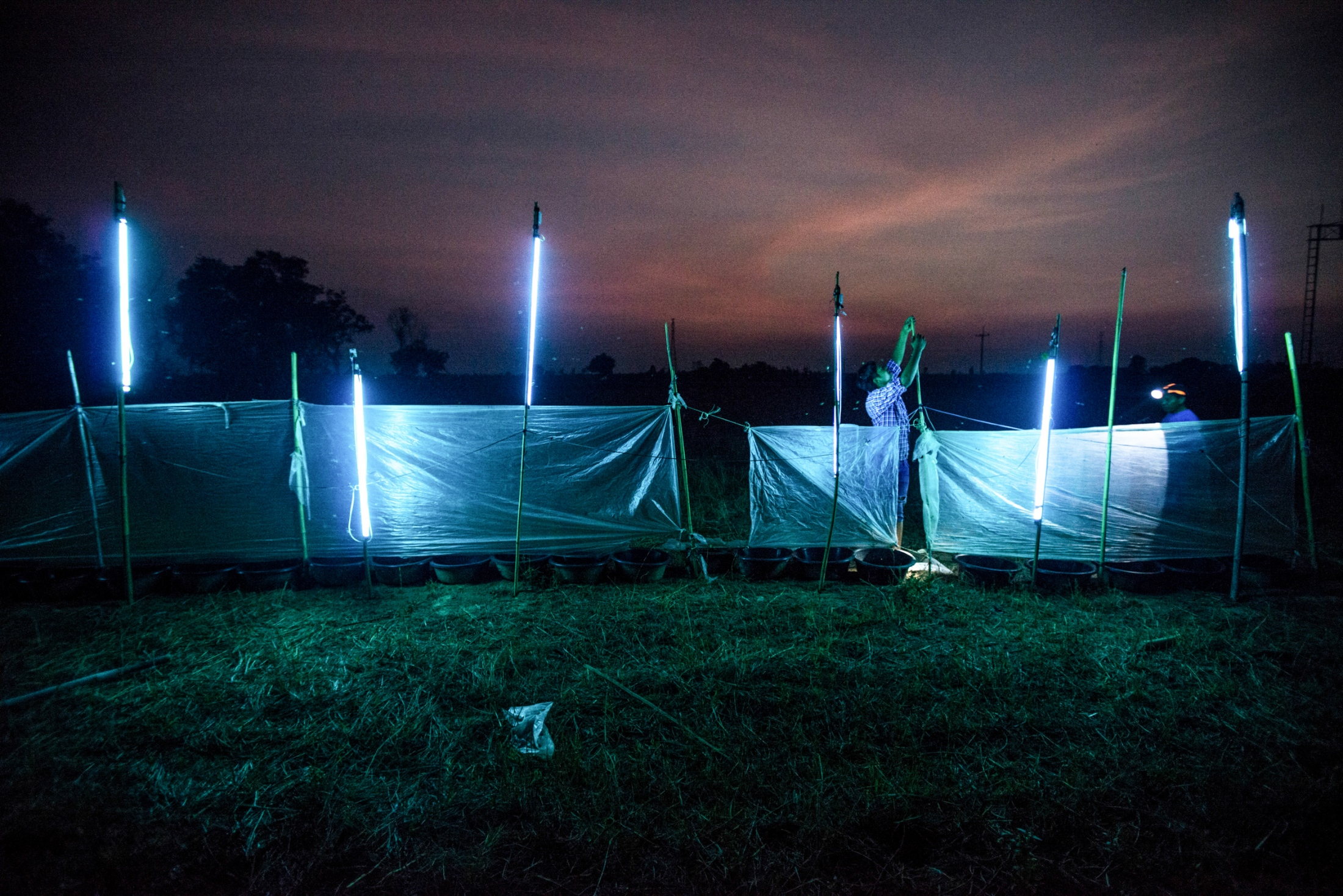 Civilian in Kaset Wisai, Roi Et, Thailand is setting up neon lights to trap bugs which is an alternative way to make a living, replacing agriculture in periods of heavy drought. May 5, 2016.