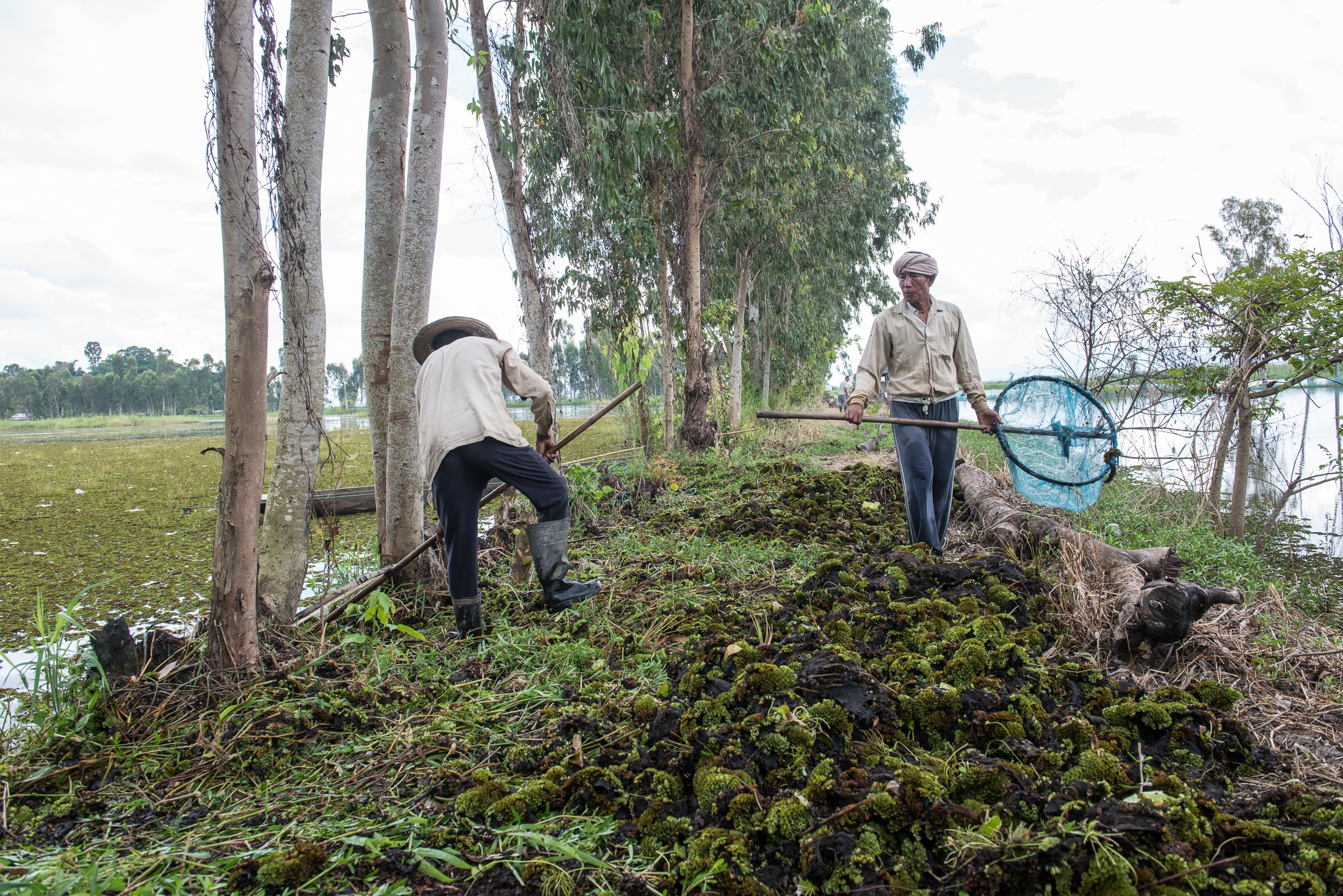 Indrajeet Tombram (left) and Haobijam Manihar perform the backbreaking task of dredging out weeds that had proliferated on a fish farm in Loktak Lake. Increased erosion and use of fertilizer along with altered hydrology due to the commissioning of the Ithai Dam have resulted in increased rates of eutrophication.