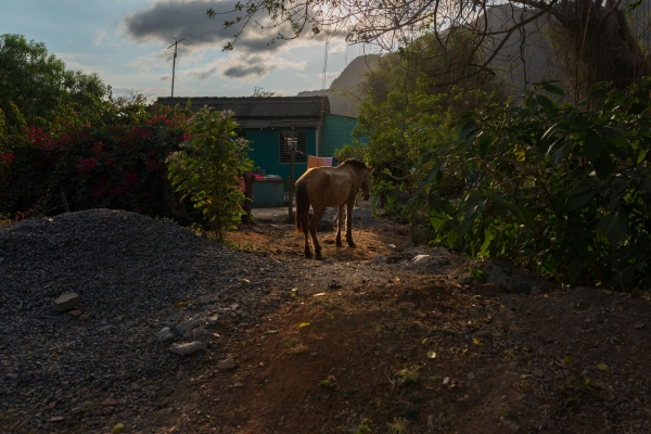 A horse takes some rest as the sun sets in Viñales Viñales Valley is famous for horseback trekking through tobacco plantations .