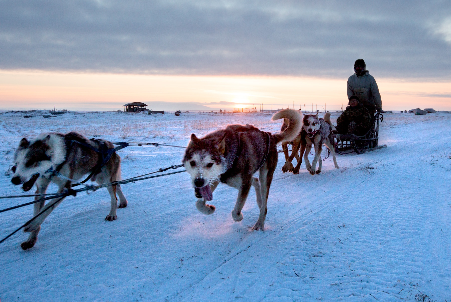 A resident of Shishmaref returns home from a dog run where the dogs are trained both the discipline and endurance necessary for mushing.