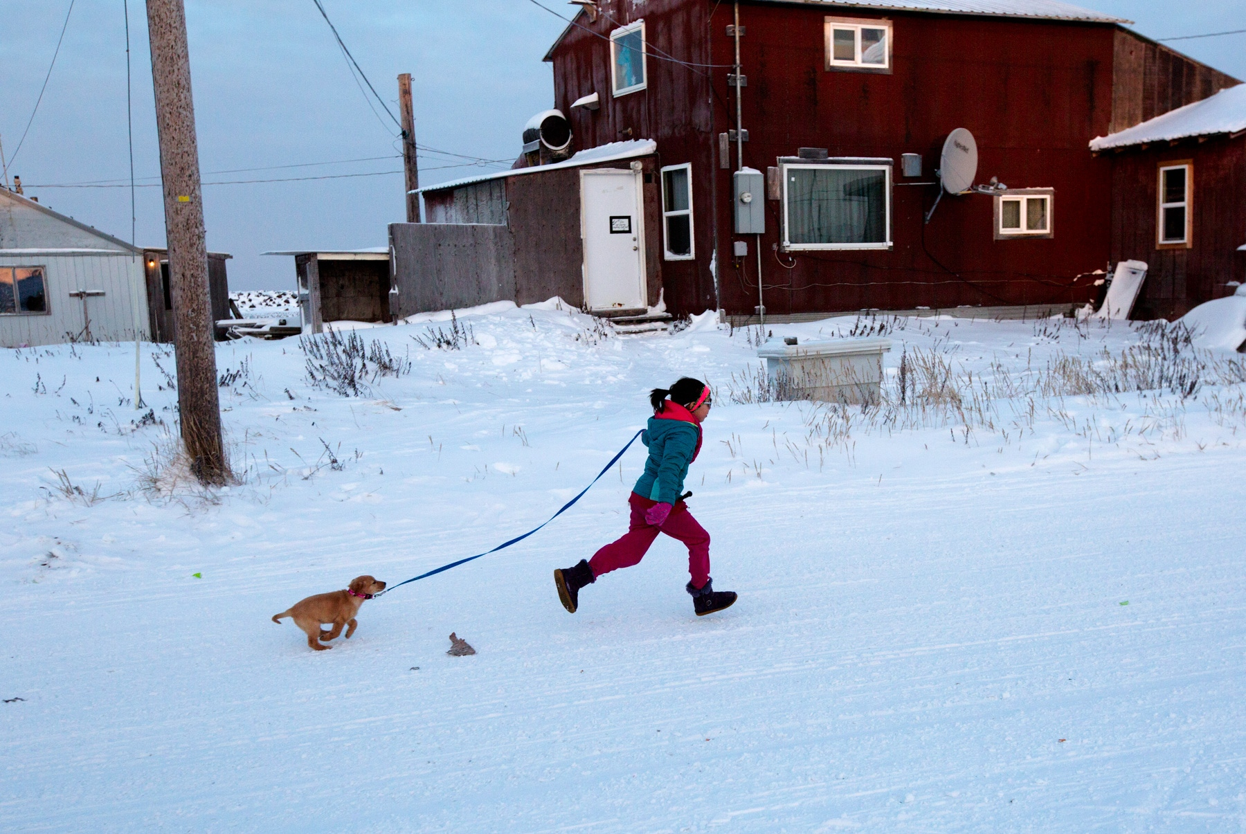 A young Shishmaref resident runs with her puppy on the main street in the village. Puppies older than 4 weeks old must be on the leash although the rule is generally not observed.