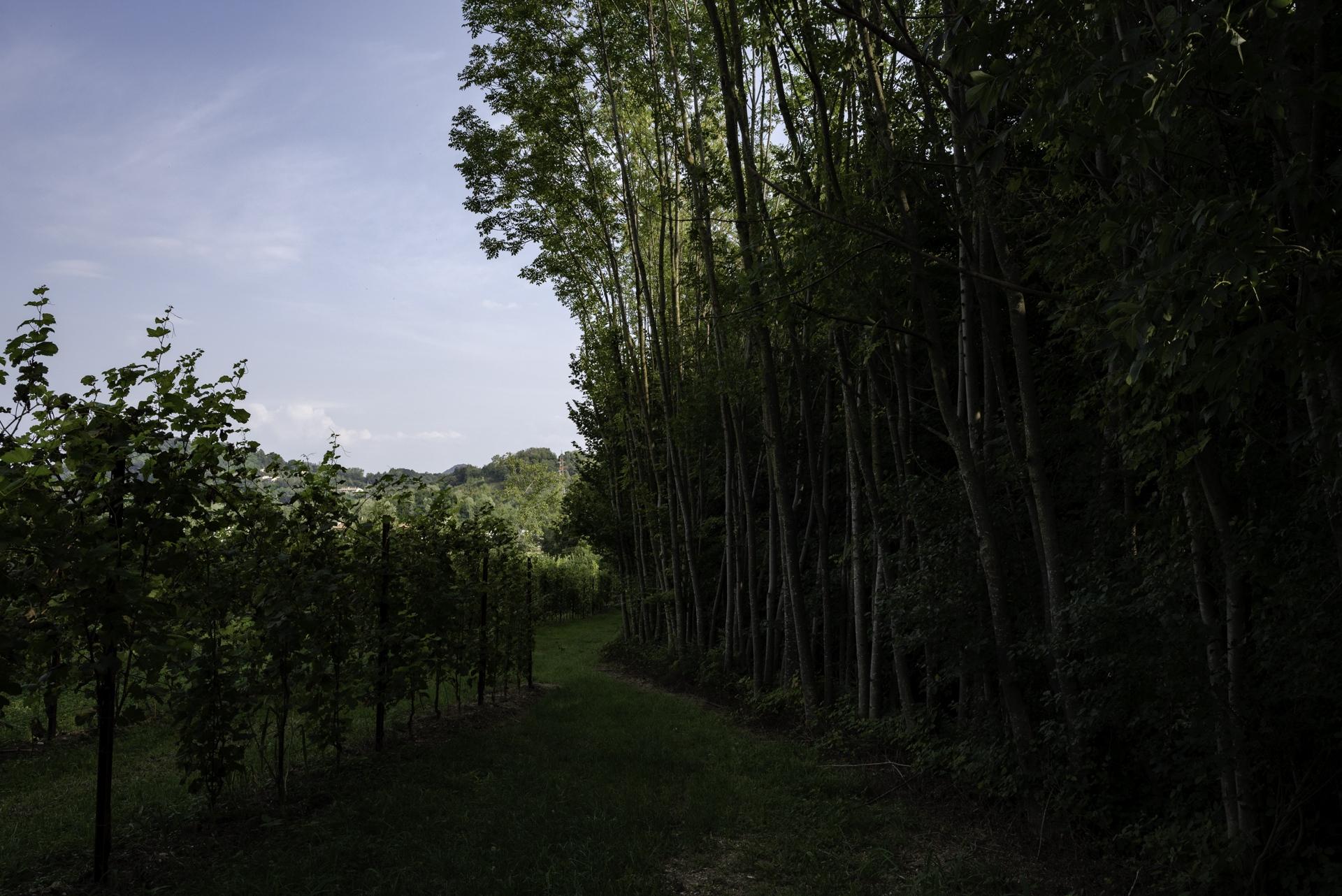 Nonostante sia una zona caratterizzata da terreni umidi quella di Cavaso ha visto recentemente l'installazione di nuovi impianti. Per liberare spazi utili sono stati disboscati ampie porzioni di boschi e siepi secolari tipiche del territorio. Cavaso del Tomba (TV).