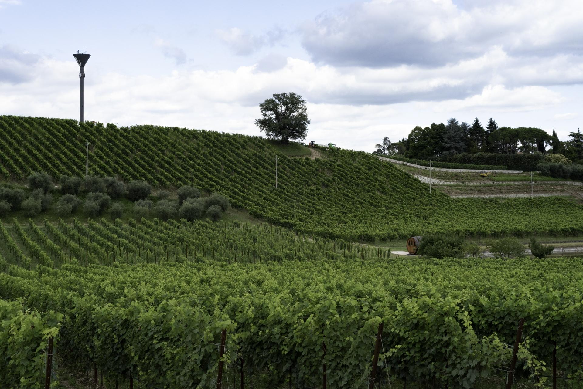 Sulla sinistra sbancamenti per ospitare nuovi impianti viticoli. Le nuove installazioni seguono la massima pendenza della collina per facilitare il passaggio dei mezzi meccanici favorendo però l'erosione del terreno e lo scivolamento a valle delle sostanze nocive con consegnuete penetrazione in falda. Vittorio Veneto (TV).