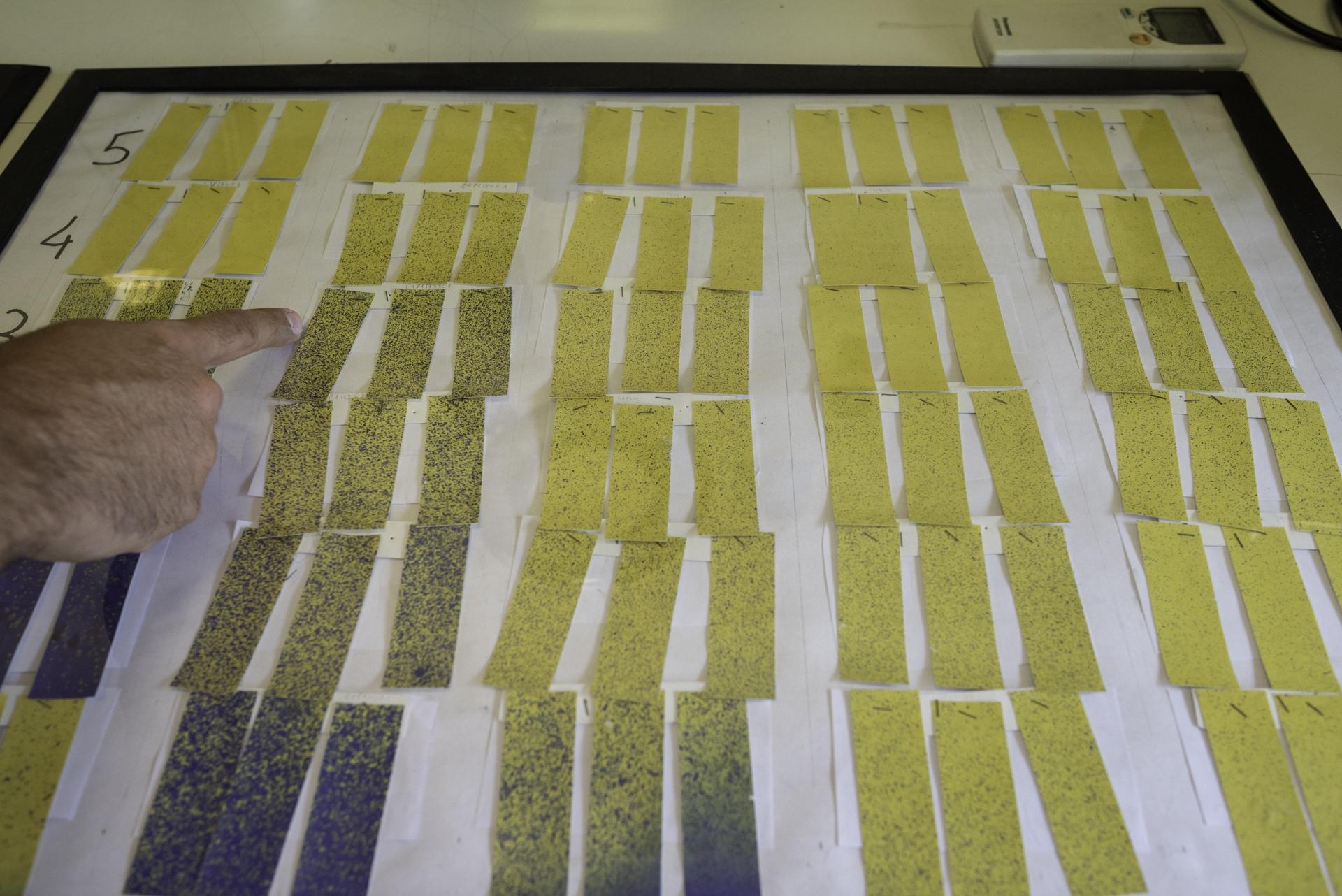 Campus di Agripolis. Cartine tornasole utilizzate per misurare la quantità di fitofarmaci dispersi fuori bersaglio. La ricerca condotta dall'agronomo Donato Loddo, ricercatore presso Istituto di Biologia Agro-ambientale e Forestale de C.N.R., dimostra l'importanza delle nuove tecniche per limitare le contaminazioni fuori campo e l'effetto deriva degli aerosol. Legnaro (PD).