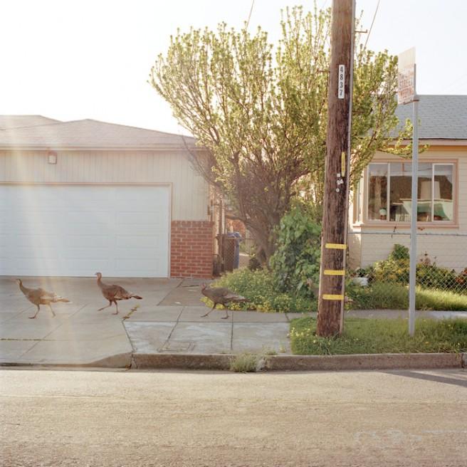 Art and Documentary Photography - Loading Birds.jpg