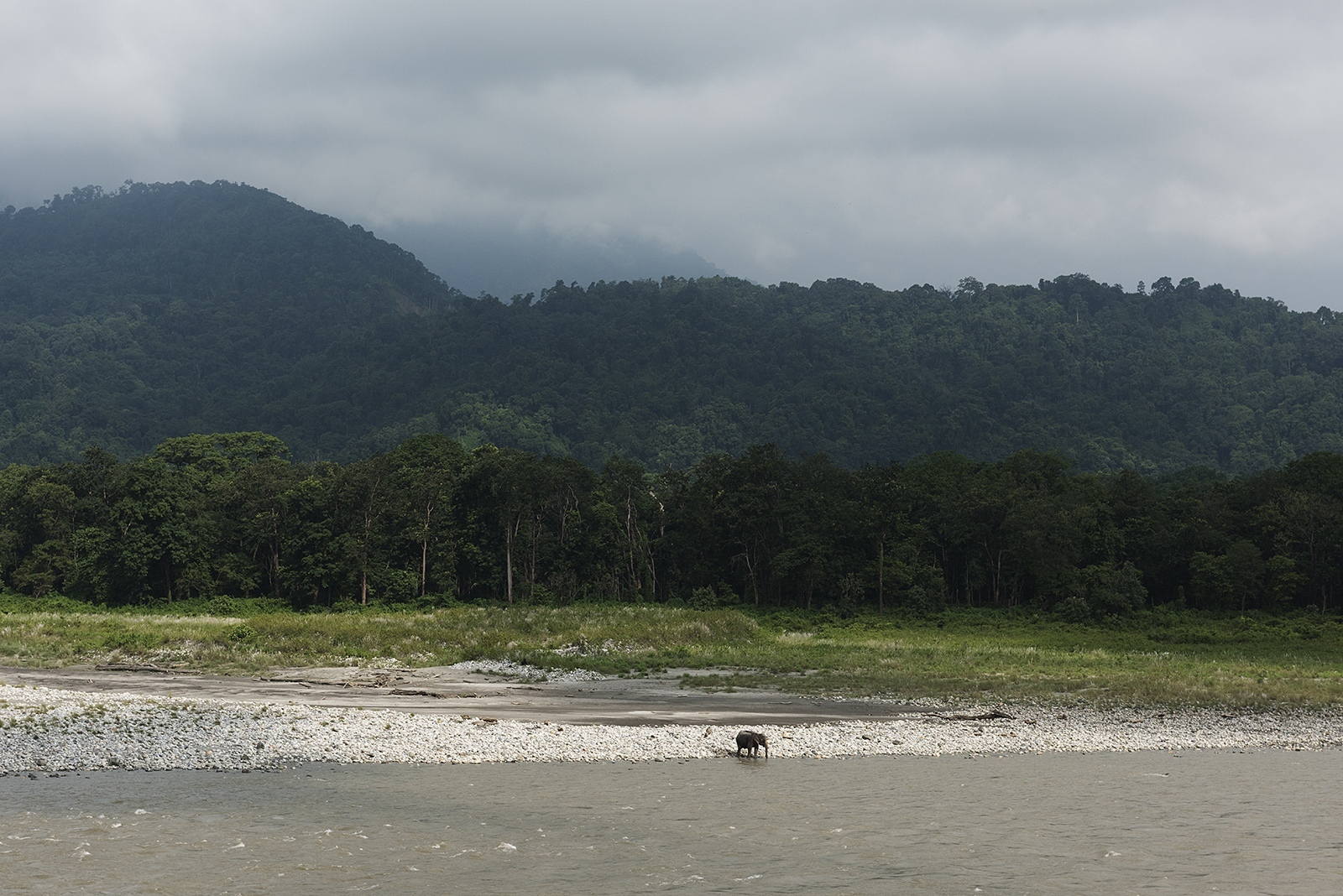 A lone elephant by the river in the Royal Manas...