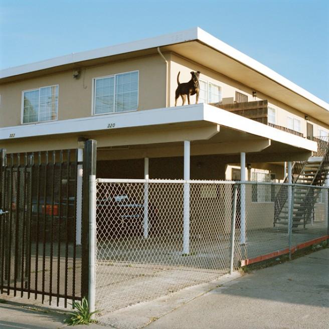 Art and Documentary Photography - Loading Dog_Roof 2.jpg