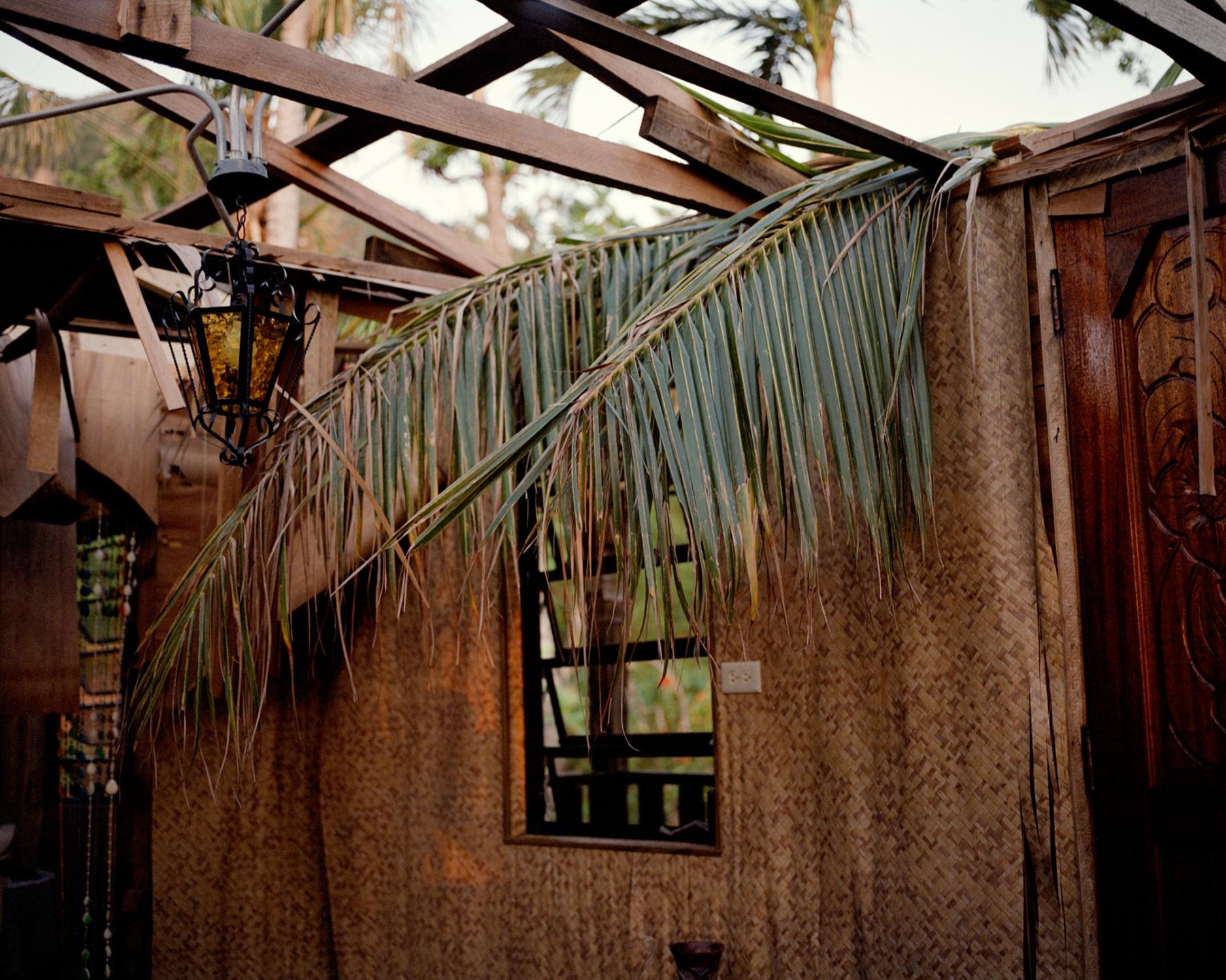 My grandmother Amparo's favorite palm tree now hangs in her living room. Villalba, Puerto Rico, December 2017.