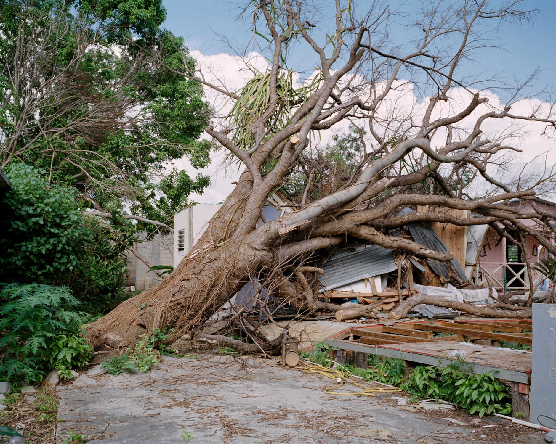 Hurricane Maria married a house and tree in the barrio of Buyones, just outside the airport my family and I always flew into, from New York. The passengers would clap after every flight had landed and the smell of mango trees would seep into the airplane.  Buyones, Puerto Rico, December 2017.