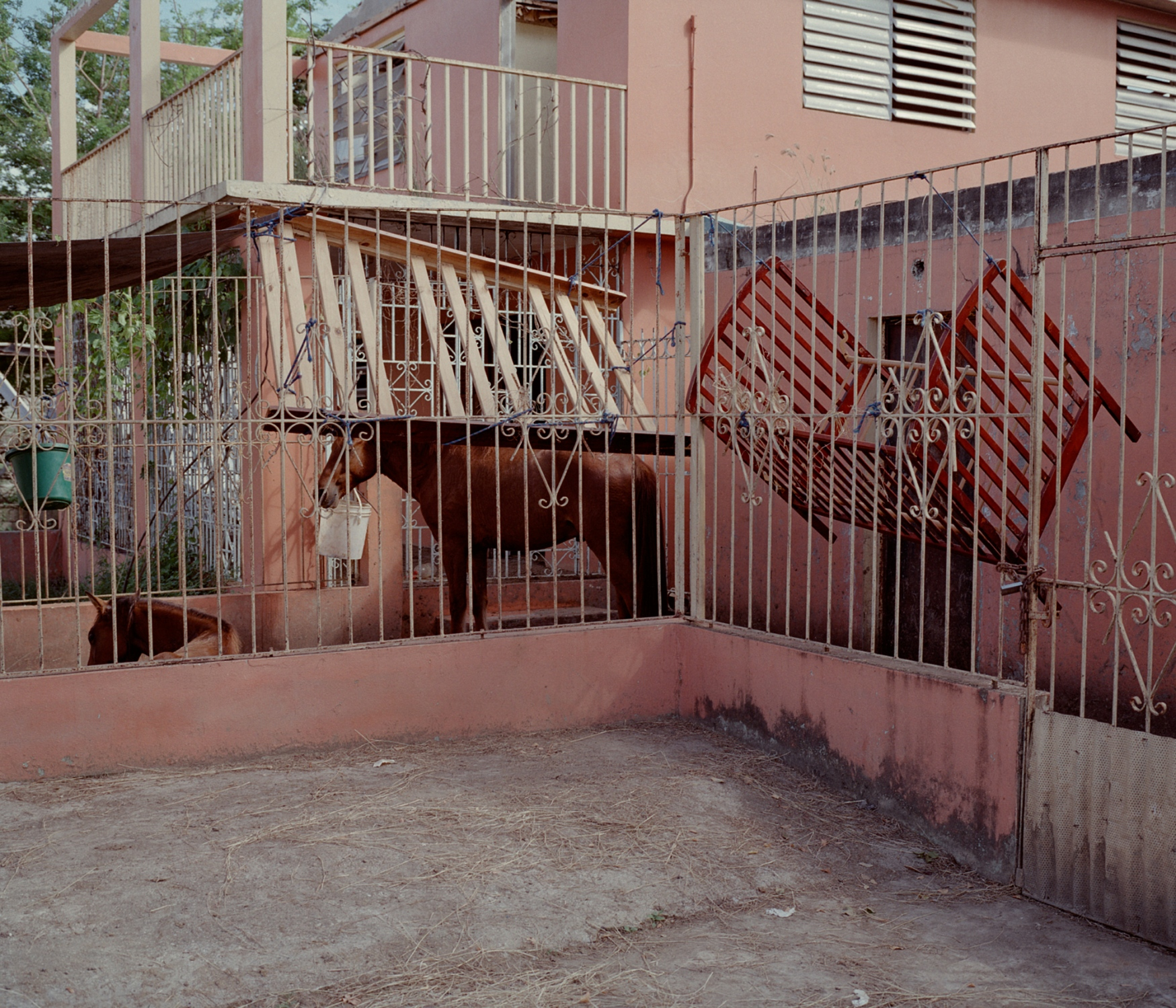 The residents of the barrio Buyones in Ponce converted an abandoned home into a holding pen for horses after Hurricane Maria decimated the area's stables.  Buyones, Puerto Rico, December 2017.