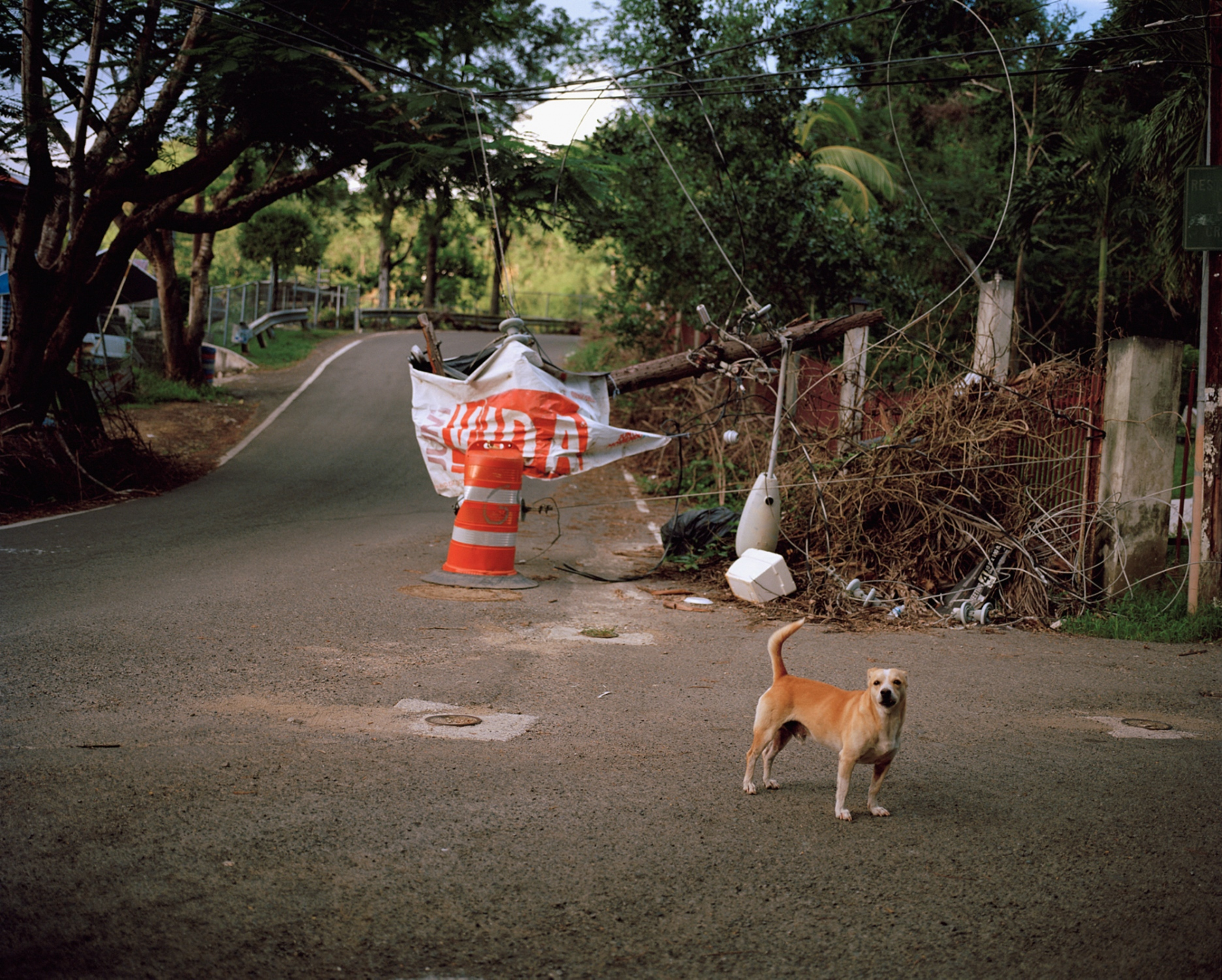 A wild dog nervously watches me as I walk to Carmelo's home in the barrio La Yuca. Ponce, Puerto Rico, December 2017.