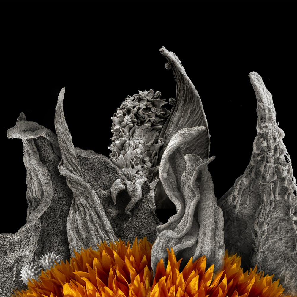 Photography image - Loading 1_Sunflower_Petals_Dash.jpg
