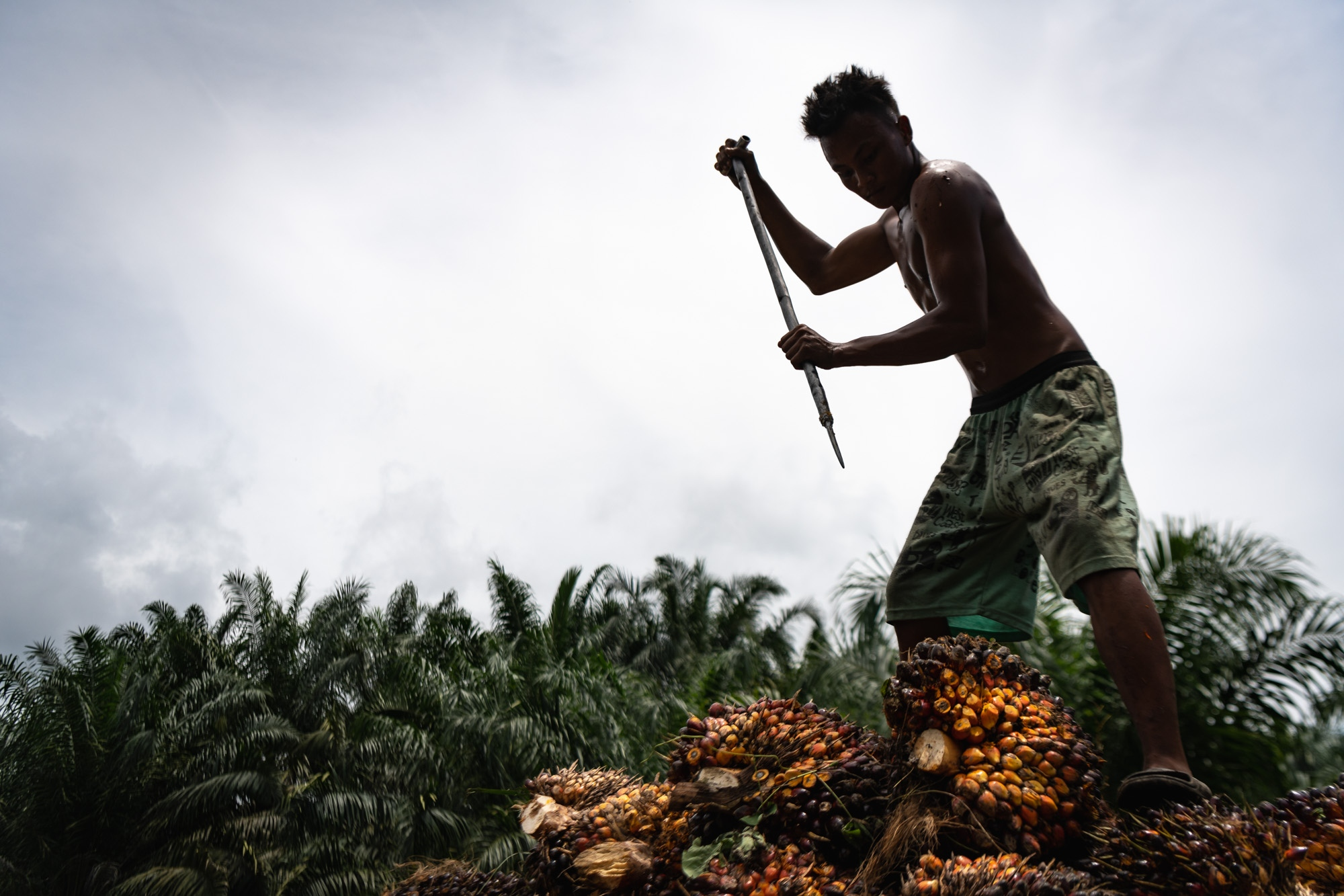 Art and Documentary Photography - Loading OIC-Sumatra-proj_David_Coulson-2.jpg
